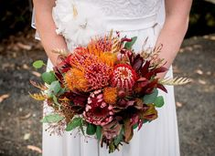 Red and Gold Summer Natives for a December Wedding Banksia, Pincushion, Protea Bridal Bouquet Fall, Fall Bouquets, Fall Wedding Bouquets, Flower Bouquet Wedding, Bridesmaid Bouquet, Floral Wedding, Bridal Bouquets, Flower Bouquets, Rainbow Wedding Dress