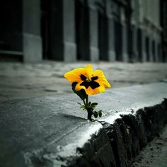 I'm the kind of person who is determined to grow even in the most difficult situations