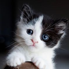 Love Cute Cats