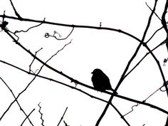 silhouette theme - S - 02/2011-01-10 - bird - sparrow