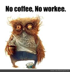 Mr. Owl, how many cups of #coffee does it take for you to become a productive worker? #coffeelovers #TheDailyGrind