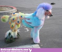 There is a new craze going around that features some very creative poodle owners. What you are about to see is the very best images of Poodle Doodles. Poodle Grooming, Pet Grooming, Like Animals, Funny Animals, Shaved Animals, Poodle Cuts, Creative Grooming, Poor Dog, Crazy Dog