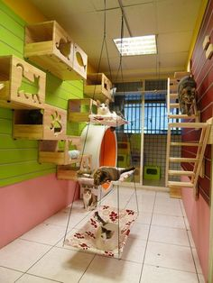 Cat room ideas that transform your walls into cat playgrounds. Works in small sp… Cat room ideas that transform your walls into cat playgrounds. Works in small spaces. Animal Room, Cat Play Rooms, Cat Climbing Wall, Cat Shelves, Cat Playground, Playground Ideas, Cat Enclosure, Cat Room, Cat Condo