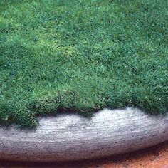 Irish Moss Sagina subulata - probably the perfect groundcover for the backyard. Evergreen, stepable, dog-friendly, easy.