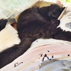 #purrsday #cats #rescuecat #catsofinstagram #catstagram #blackcats #blackcatswag #blackcatsofinstagram