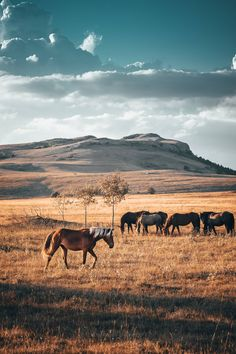 This young blond feral horse caught my eye. Too bad he was pretty fast and couldn't get closer to him. Pretty Horses, Horse Love, Horse Girl, Beautiful Horses, Animals Beautiful, Western Photography, Horse Photography, Photo Usa, Cowboy Art