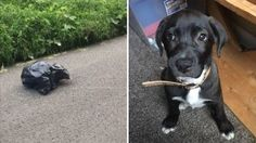 Officials say the puppy appeared to be in good shape after being in the bag for 15 minutes, but they are still looking to pursue felony torture charges.