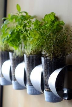 Indoor Herb Garden Tutorial: This wine rack can store a lot more than your favorite reds and whites: Squeeze pint glasses with your favorite herbs into the compartments to make a DIY hanging garden.