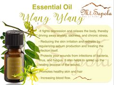 Chronic Stress, Fungi, Aromatherapy, Essential Oils, Treats, Pure Products, Bottle, Sweet Like Candy, Goodies