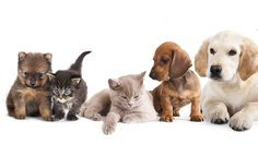 Dogs and cats: The animals among us. Plymouth Animal Welfare Lecture 2015 with Dr. John Bradshaw