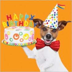 Party Dog - Happy Birthday Funny - Funny Birthday meme - - Party Dog The post Party Dog appeared first on Gag Dad. Happy Brithday, Happy Birthday Kids, Happy Birthday Celebration, Happy Birthday Pictures, Happy Birthday Messages, Happy Birthday Greetings, 21 Birthday, Sister Birthday, Birthday Quotes