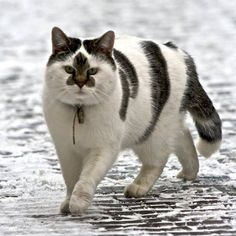 Amazing markings – never seen anything quite like this before.