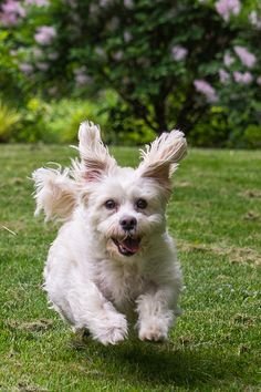 #Dog - Bunny  Like,Repin,Share, Thanks!