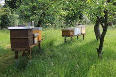Einblick in das Imkerleben: Honigernte vorbereiten und schnelle Durchsicht - und was ist Regel #1 beim Imkern?