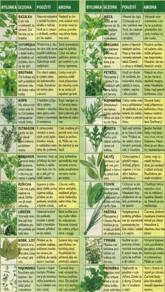 Bylinky - My site Healing Herbs, Medicinal Herbs, Vegetable Pancakes, Stipa, Detox Salad, Dieta Detox, Health Advice, Detox Drinks, Herb Garden
