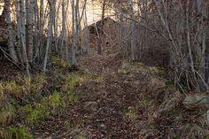 Bosc de Virós