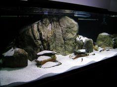 aquascape idea Biotope Aquarium, Cichlid Aquarium, Aquarium Fish, Nature Aquarium, Planted Aquarium, Rock Background, Fishing World, Aquarium Design, Paludarium