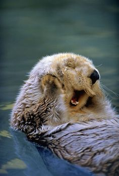 """AH YOU LOVE ME, YOU REALLY LOVE ME!"" 