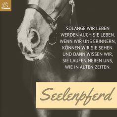 Pferdesprüche & Pferdepflege-emma-pferdefuttershop.de(12)