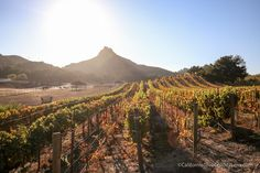 Malibu Wine Hikes: Meeting Stanley the Giraffe at Saddlerock Ranch via @cathroughmylens