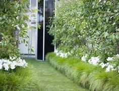 Image result for underplanting bamboo