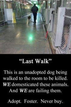 And the poor thing had no idea.  He probably wagged his tail the whole way.  I know because I've seen it.  Heartbreaking.