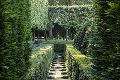 #peterfudge English box hedges form an alleyway