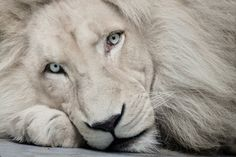 KING. #incredible #majestic #nature