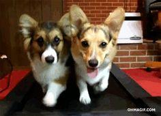 cute-dogs-running-on-a-treadmill