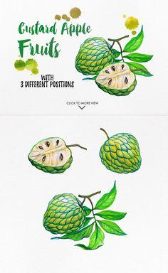 watercolor fruits vol. Fruits Drawing, Food Drawing, Botanical Illustration, Graphic Illustration, Apple Painting, Fruit Logo, Watercolor Fruit, Apple Fruit, Exotic Fruit