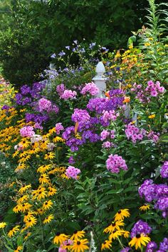 *Phlox Paniuculata, 'Laura' and Phlox Paniuculata 'Eva Cullum' with Black-Eyed Susans
