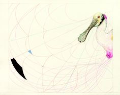 © James Prosek, Spoonbill, 2006, watercolor, graphite, and colored-pencil on paper, courtesy of the artist and Waqas Wajahat, New York