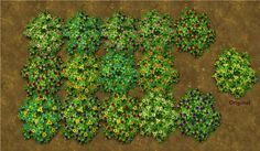 Mod The Sims - Pansy Variety Pack