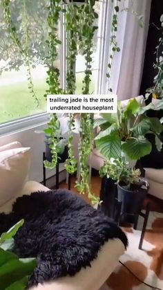 Inside Plants, Room With Plants, House Plants Decor, Plant Decor, Indoor Garden, Garden Plants, Indoor Plants, Plants On Deck, Household Plants