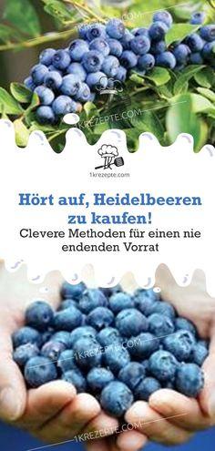 Stop buying blueberries! Clever methods for a never-ending supply - Gartentipps - Pflanzen Gardening Supplies, Gardening Tips, Mango Salat, Herb Garden Design, Garden Types, Zucchini Chips, Pallets Garden, Garden Care, Growing Herbs