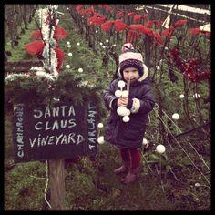 Santa Claus Vineyard by Anaïs Tarlant (the 13th generation!)