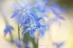 ~ Blue bells ~ by Siv Olsen on Bokeh, Happy Easter, Blue Bells, Bloom, Nature, Flowers, Plants, Olsen, Instagram
