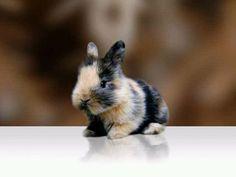 Bavy bunny!