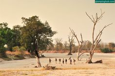 Safari experiences in Zambia #glamping #african #landscape