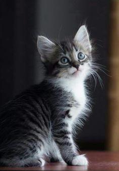 Mi hermosa gatita 😻