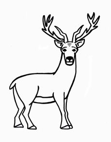 how to draw a moose for kids