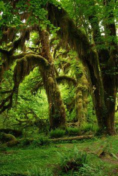A moss forest