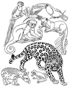 Rainforest Animal Coloring Pages. 20 Rainforest Animal Coloring Pages. Staggering Rainforest Coloring Pages Image Inspirations Jungle Coloring Pages, Puppy Coloring Pages, Coloring Pages For Kids, Coloring Sheets, Coloring Book, Colouring, Kids Coloring, Rainforest Theme, Rainforest Animals