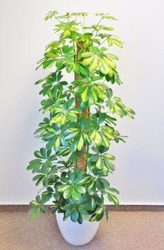 How To Grow Lemon, Rare Plants, Wish List, Spot Lights, Yellow, Landscape, Photo Illustration