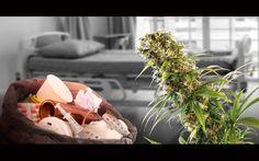 Tausende Krankheiten sind wegen ihrer Seltenheit und Komplexität bislang kaum erforscht worden. Cannabis und Cannabinoide könnten komplexe Lösungen für diese schweren Krankheiten darstellen. Jetzt …