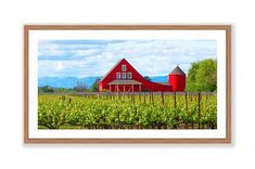 California Napa Valley Wine Country, Red Winery Vineyard Photo, Panorama Barn Print, Large Napa Valley Photo, Oakville Spring Countryside