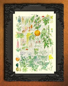 Botanical Poison Plants Art Print On 1920 by MadameMemento on Etsy