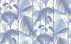 Palm Jungle (95/1005) - Cole & Son Wallpapers - A multi layered design of palm leaves creating a dense jungle of foliage, shown here in china blue on a off white background. More colours are available. Please order a sample for true colour match. Paste-the-wall product.