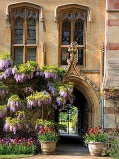 Chapel Passage with Wisteria Balliol College Oxford Oxford England, London England, Beautiful World, Beautiful Gardens, Beautiful Places, Balliol College, Places To Travel, Places To Visit, Vintage Inspiriert