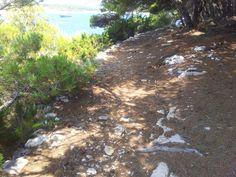 carpe diem island near hvar croatia